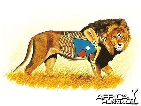 points vitaux chasse lion
