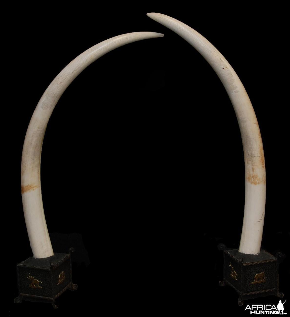 Tusks
