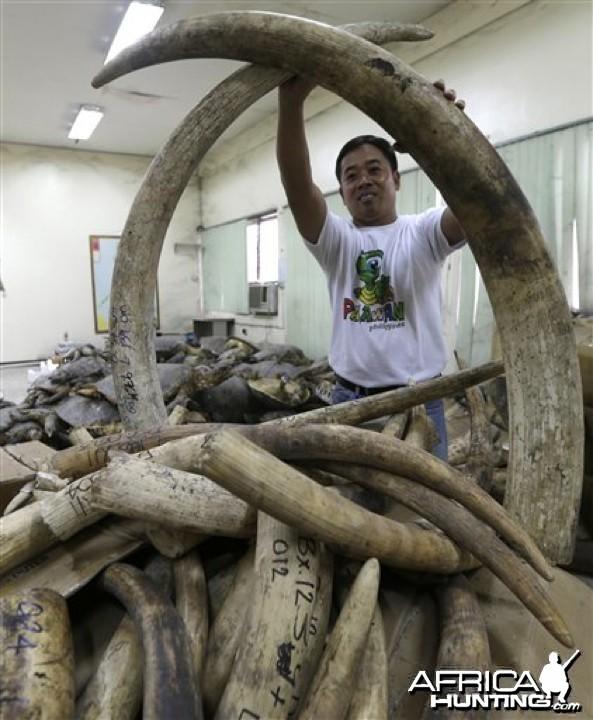 Seized Ivory