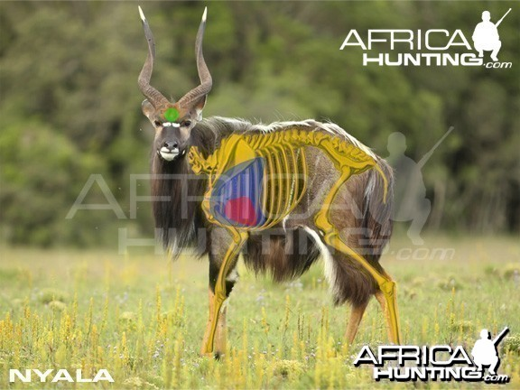 Hunting Nyala Shot Placement