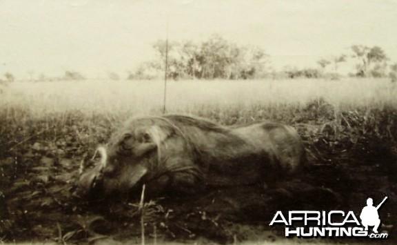 Hunting Sudan Warthog