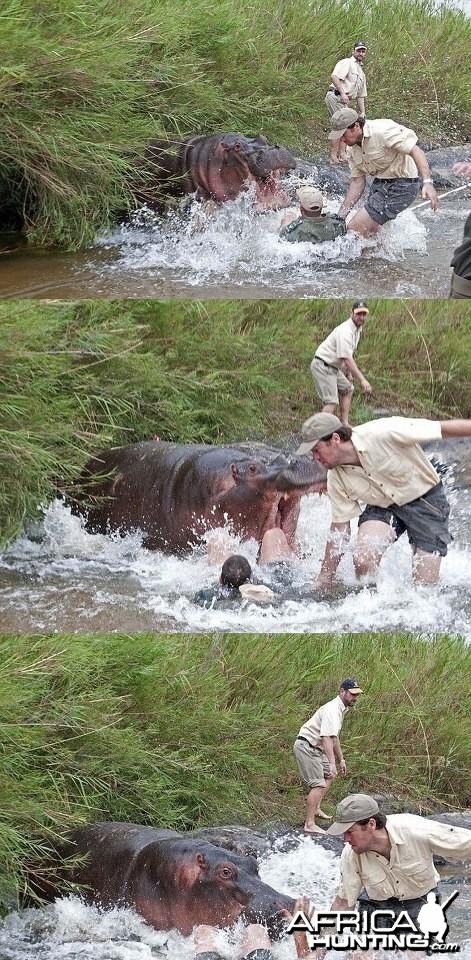 Hippo scare!
