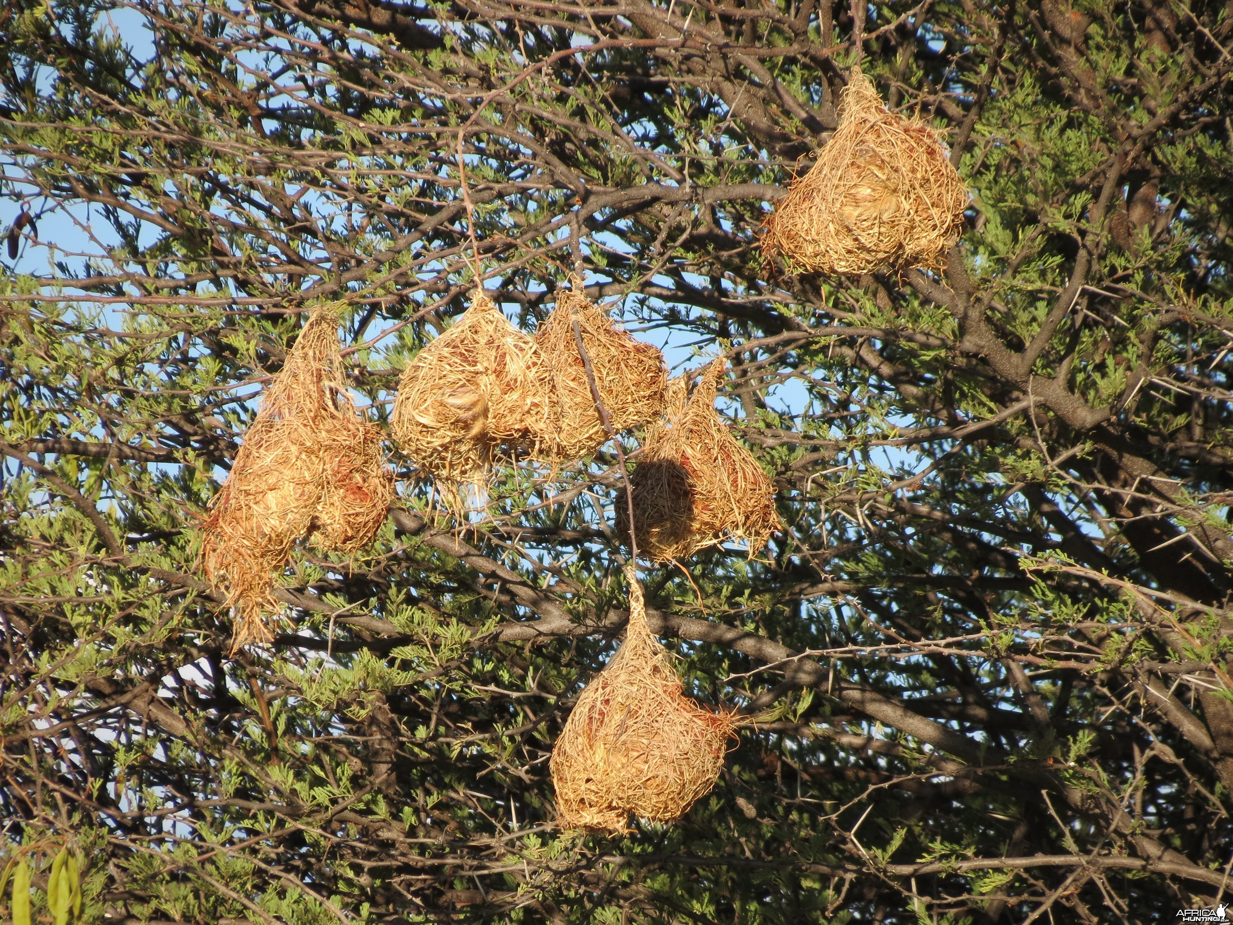 Nests Namibia