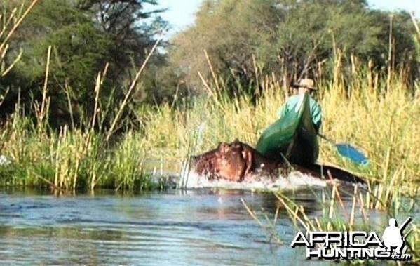 another narrow 'river horse' escape