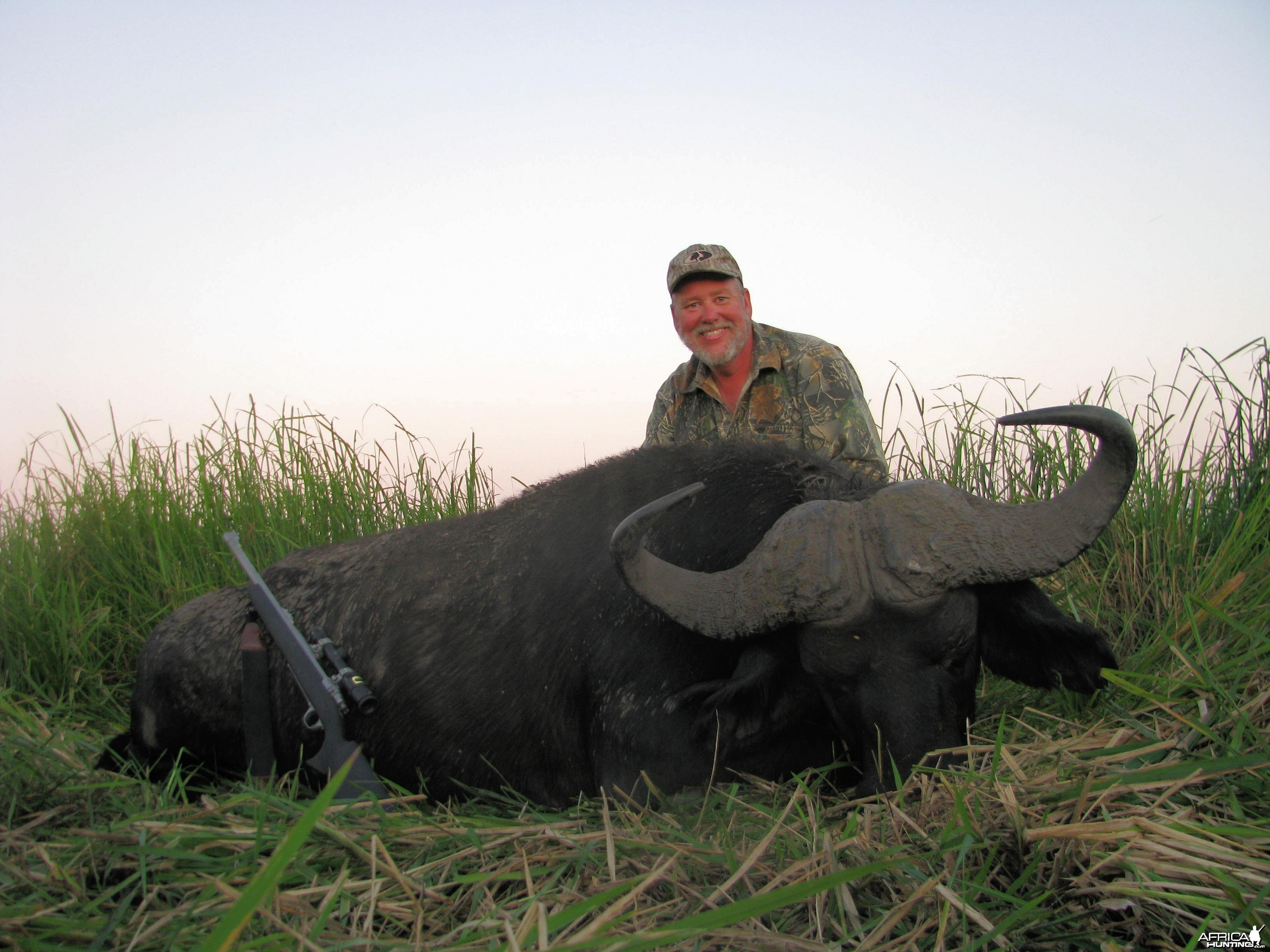 Mozambique Buffalo