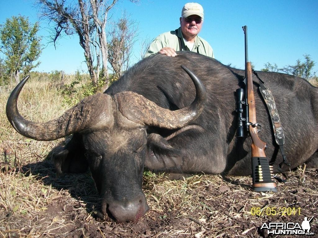 Buffalo hunted with Farren Safaris in Zimbabwe