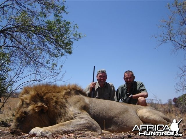 Lion hunted with Farren Safaris in Zimbabwe