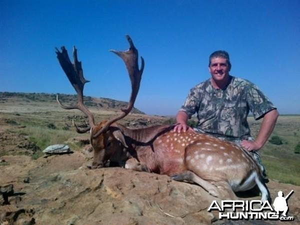 28 inch Fallow Deer