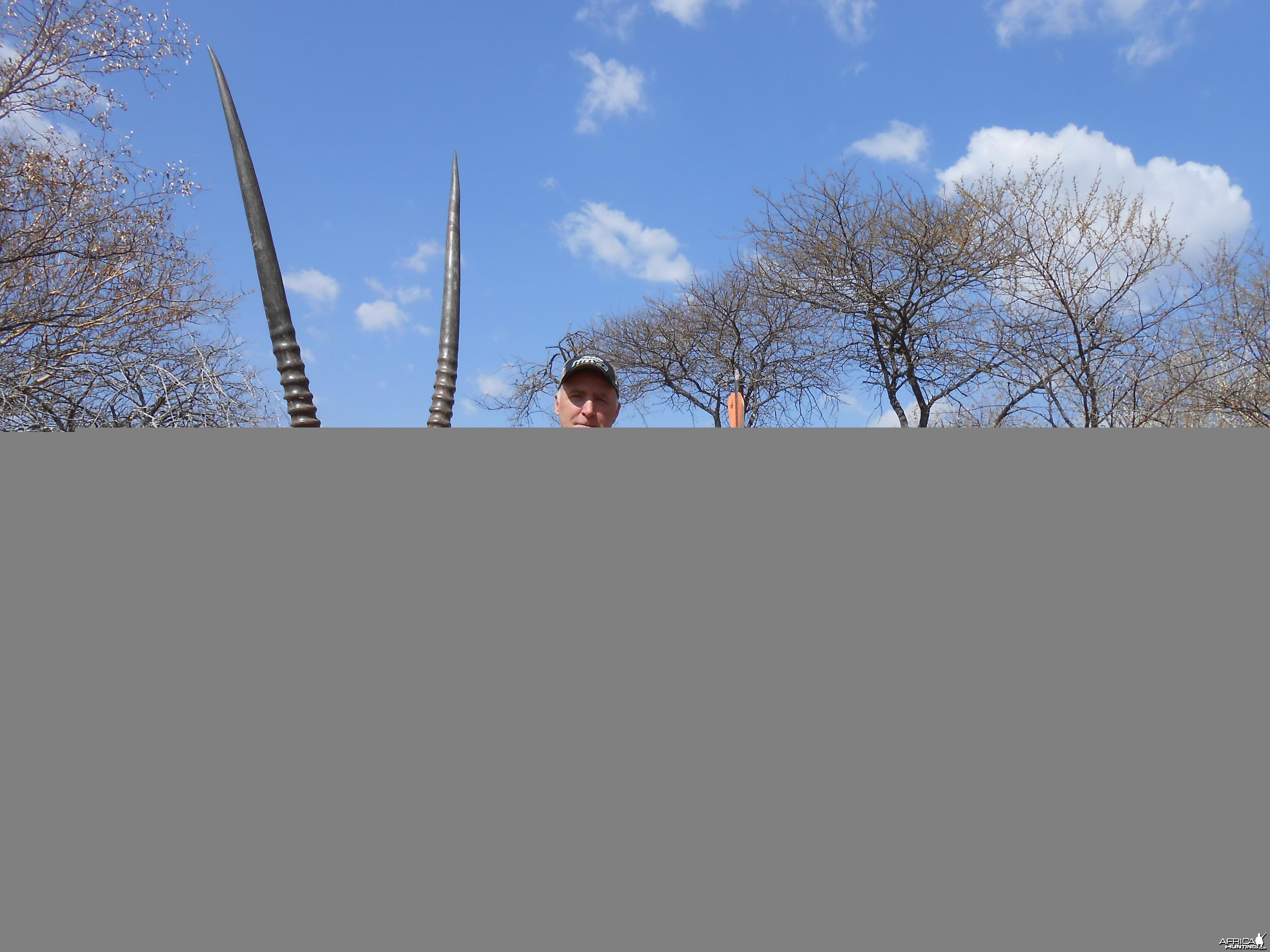 34'' bull gemsbok