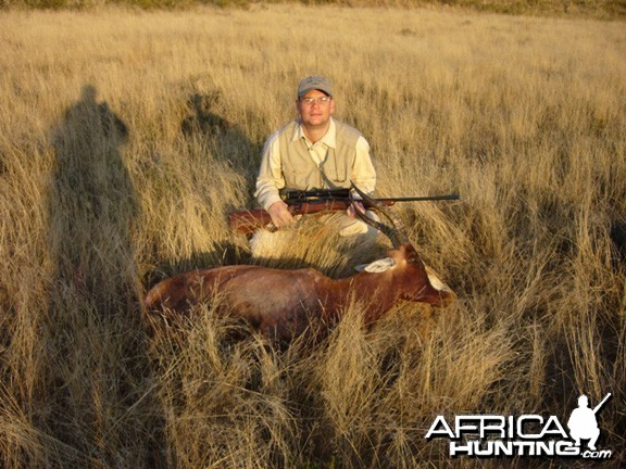 Hunting Blesbok South Africa