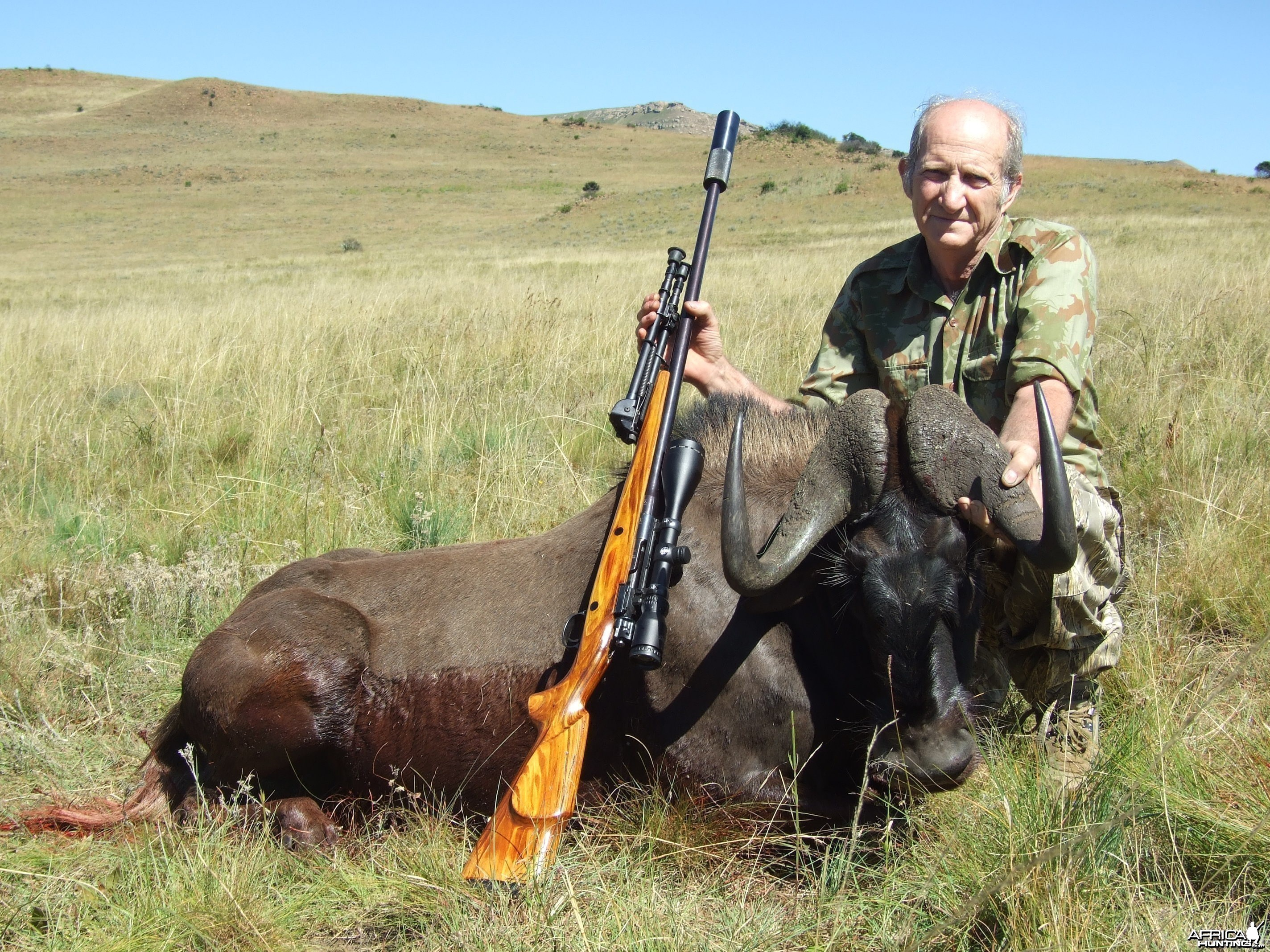 memel hunt march 2013 Black Wildebeest
