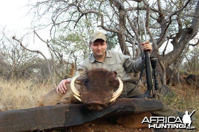 Hunting Warthog