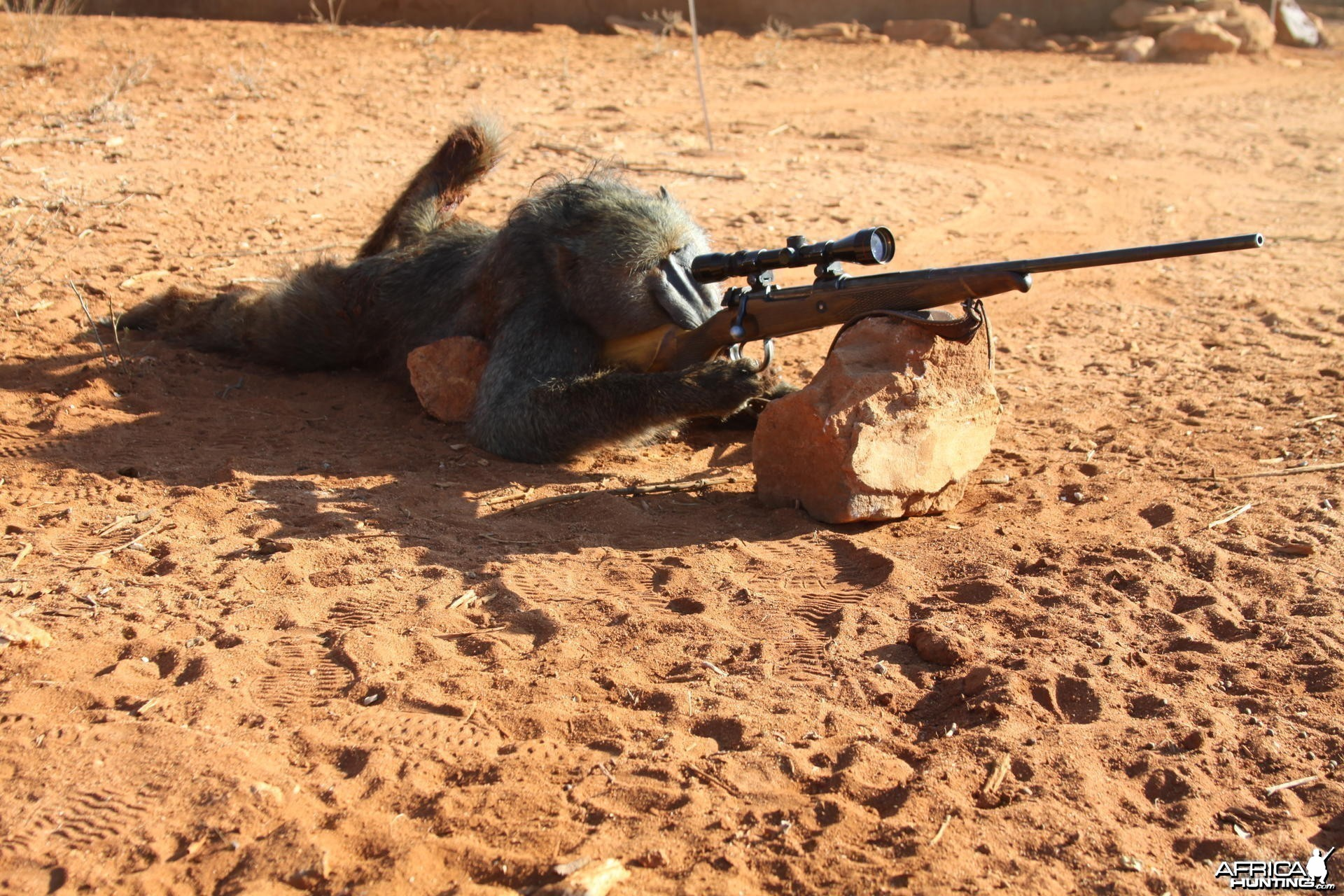 Sniper Baboon