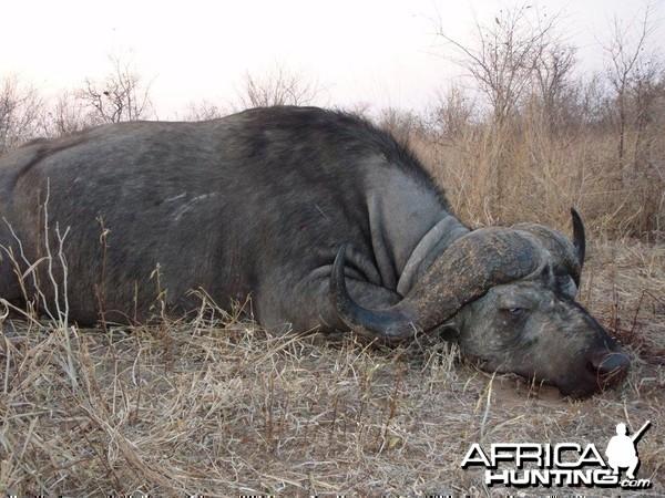 Buffalo Sengwe 1 Big Game Area Zimbabwe