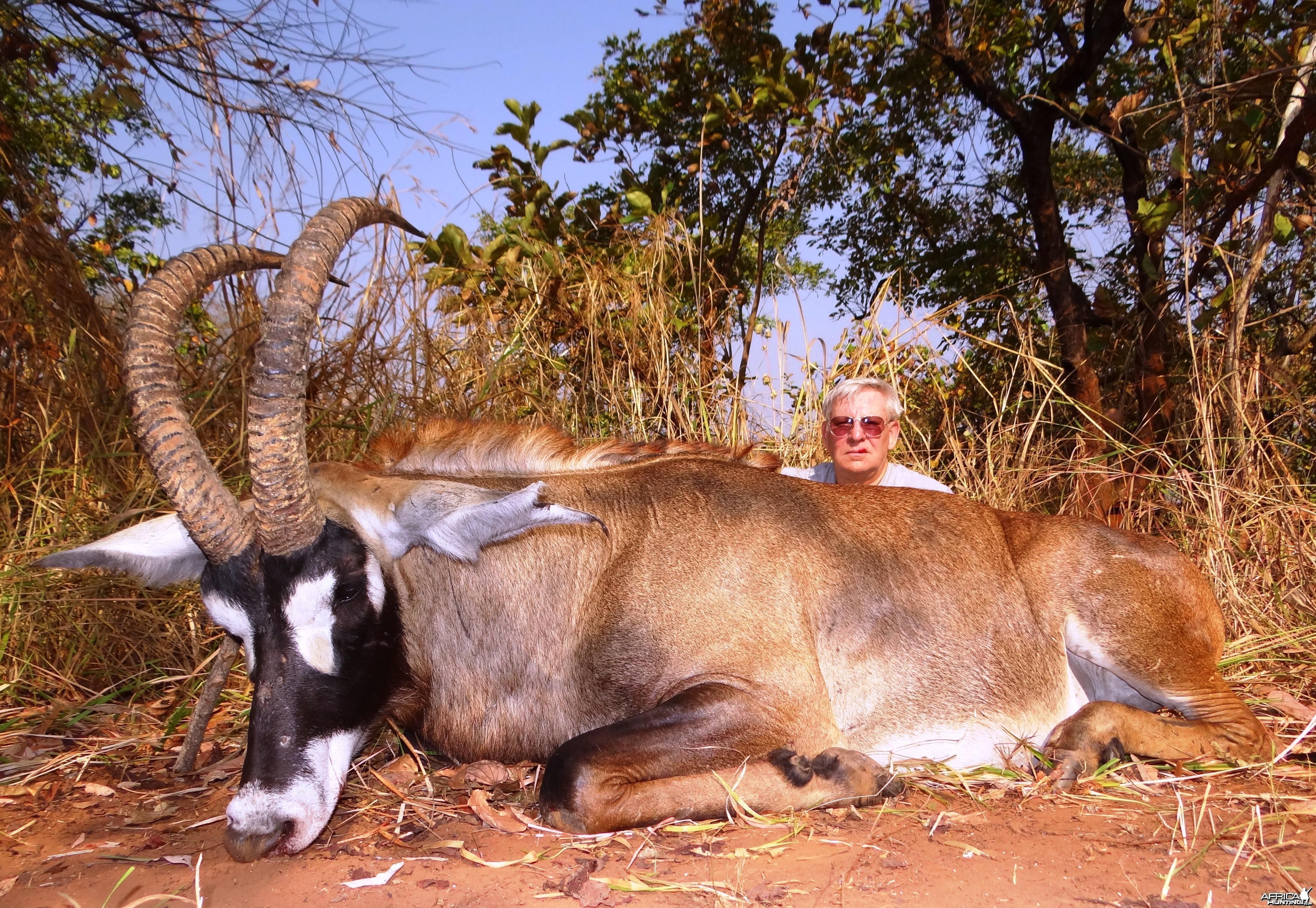 33 1/2 Roan bull