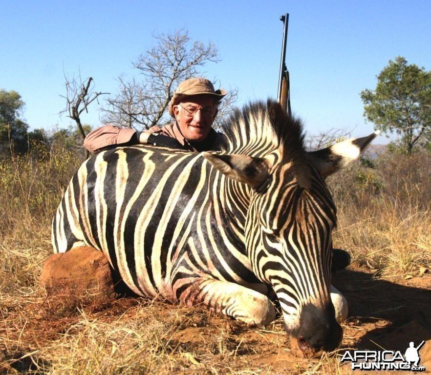 Burchell's Zebra Hunting