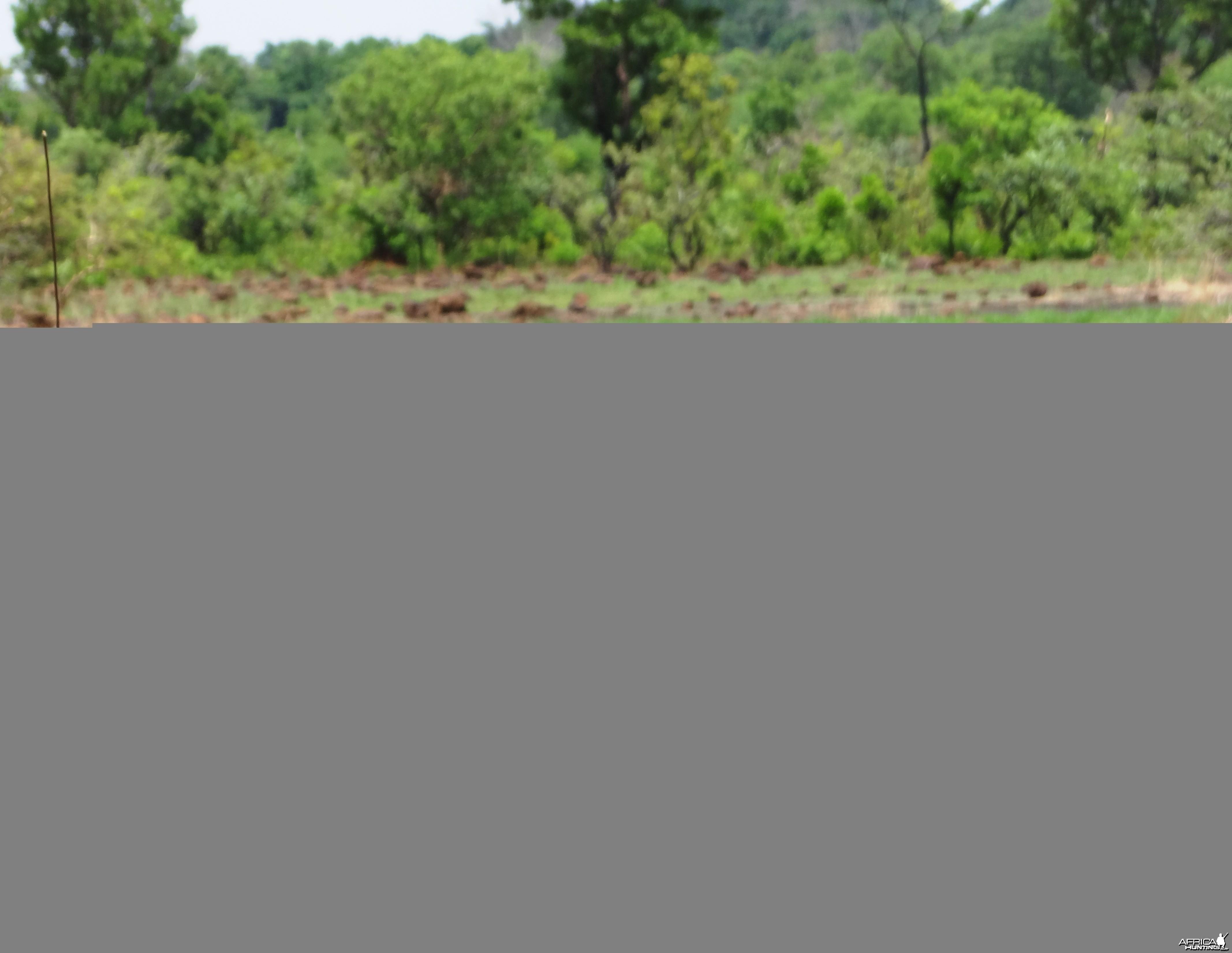 nice warthog
