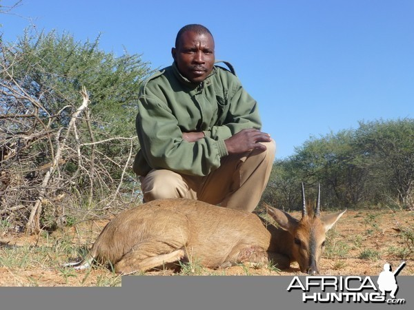 Duiker hunted with Ozondjahe Hunting Safaris in Namibia