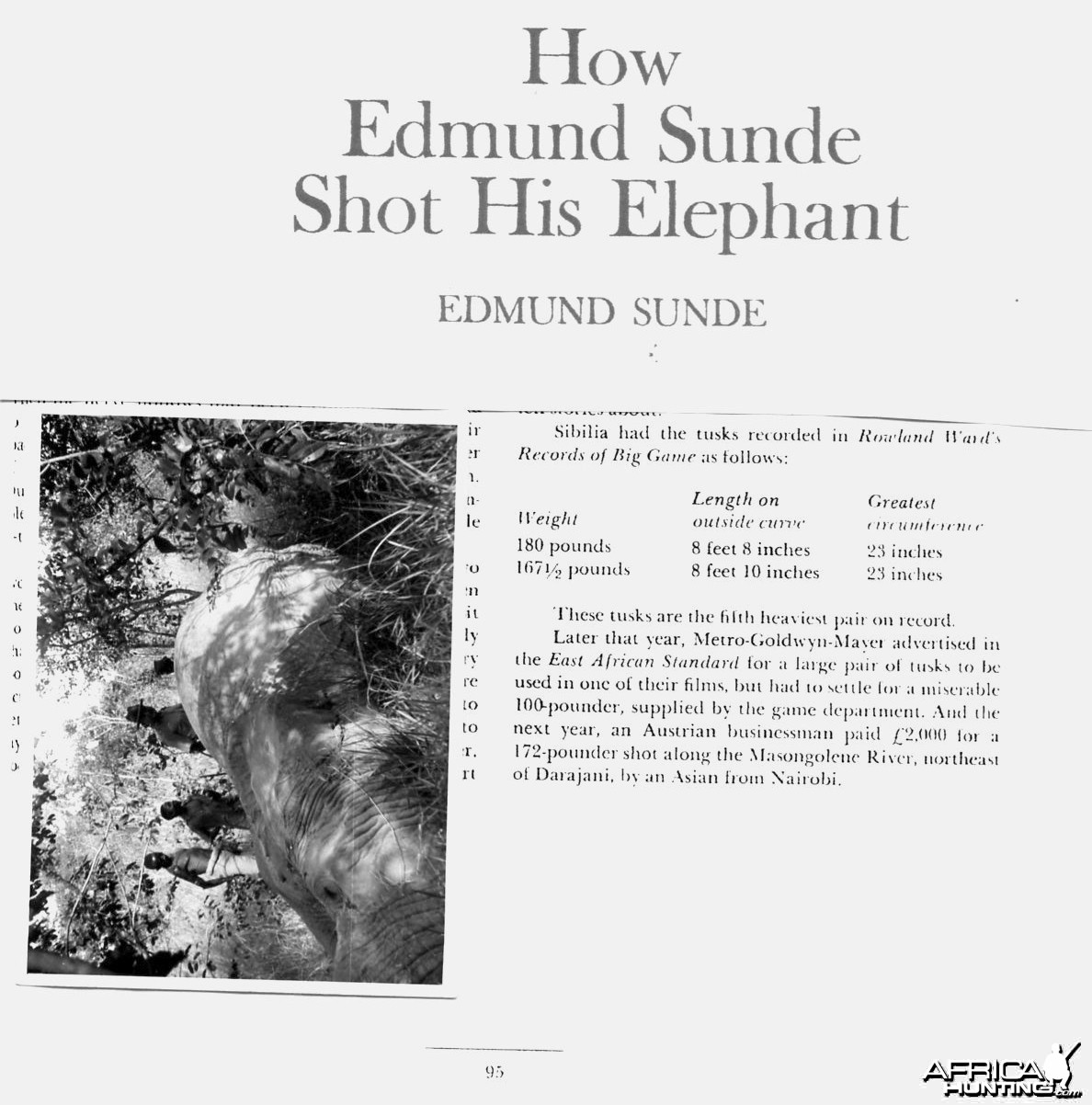 Edmond Sunde 180 pounds Elephant