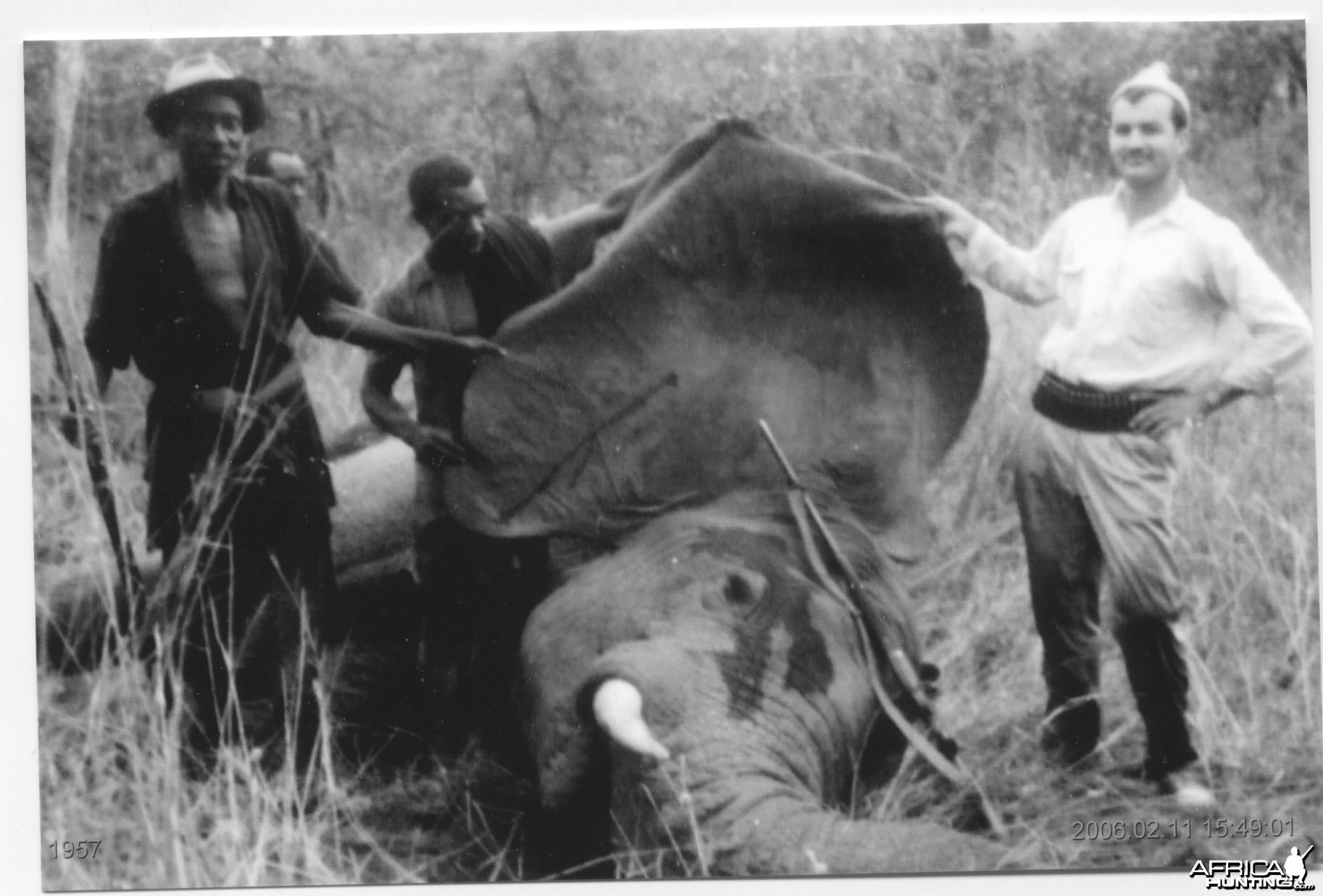 Claudio Delfabro Elephant