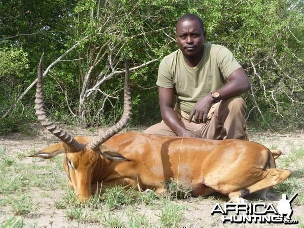Impala Tanzania