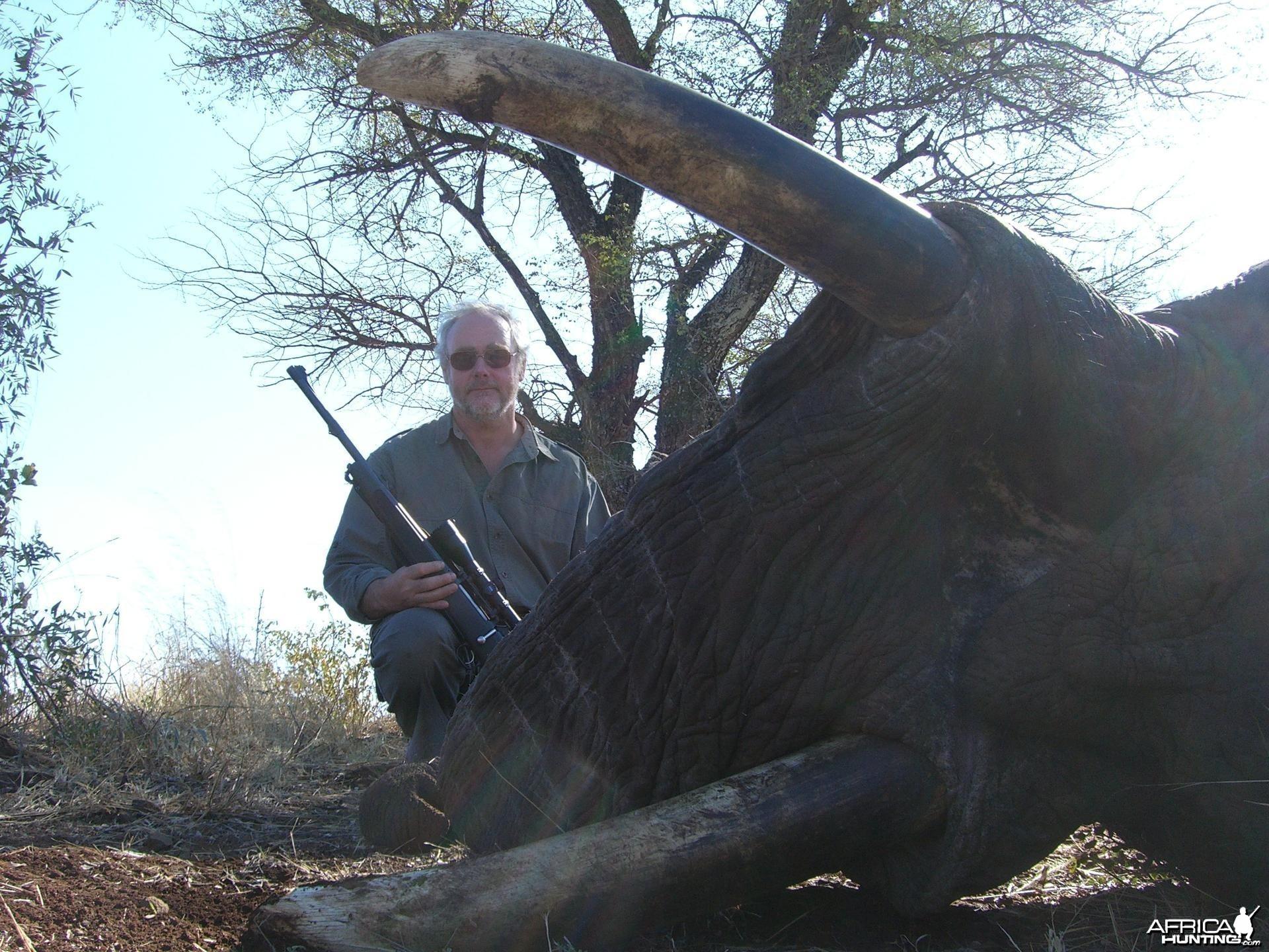 62 pound Elephant Bull