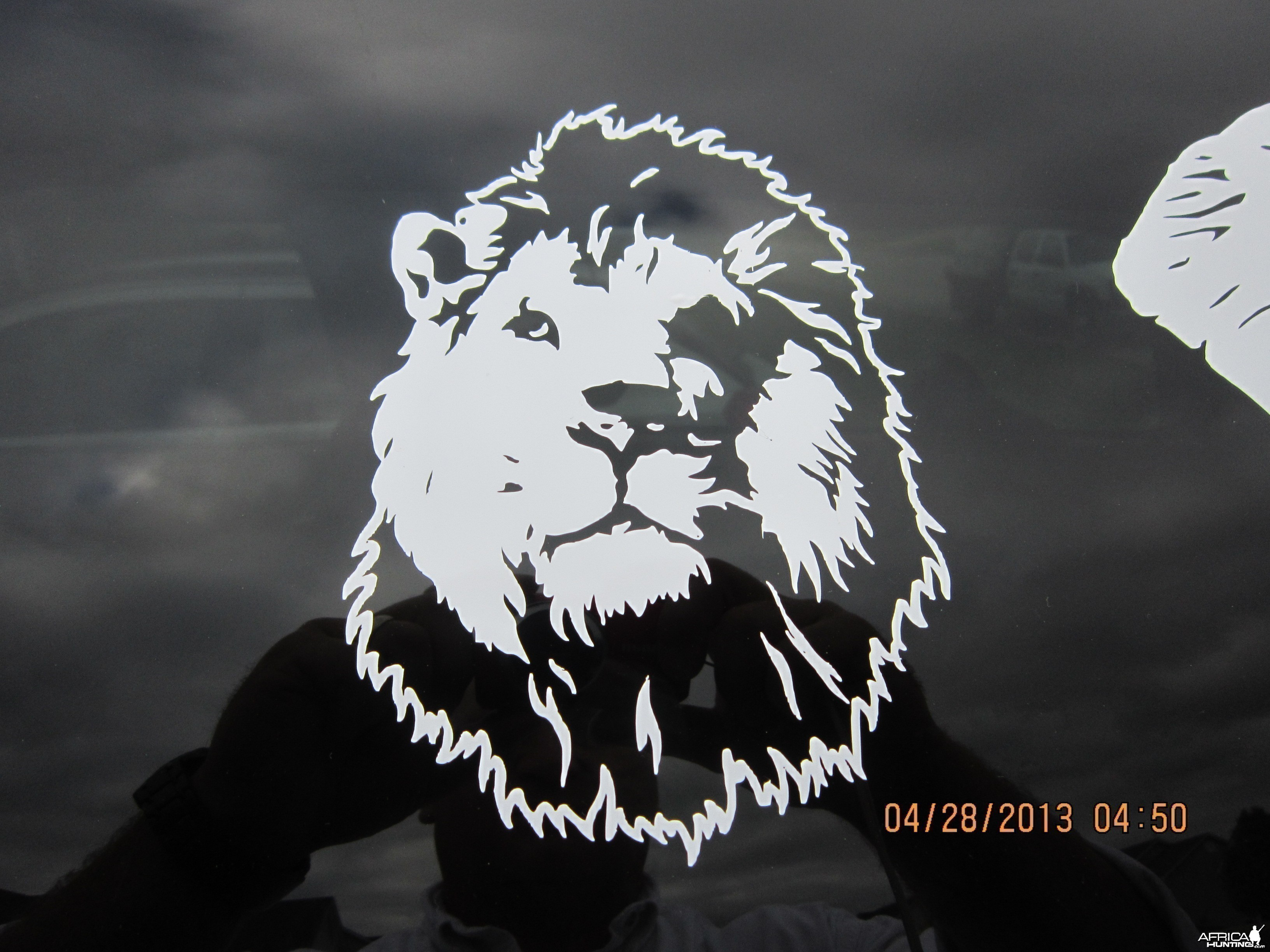 Lion Decal Stickers