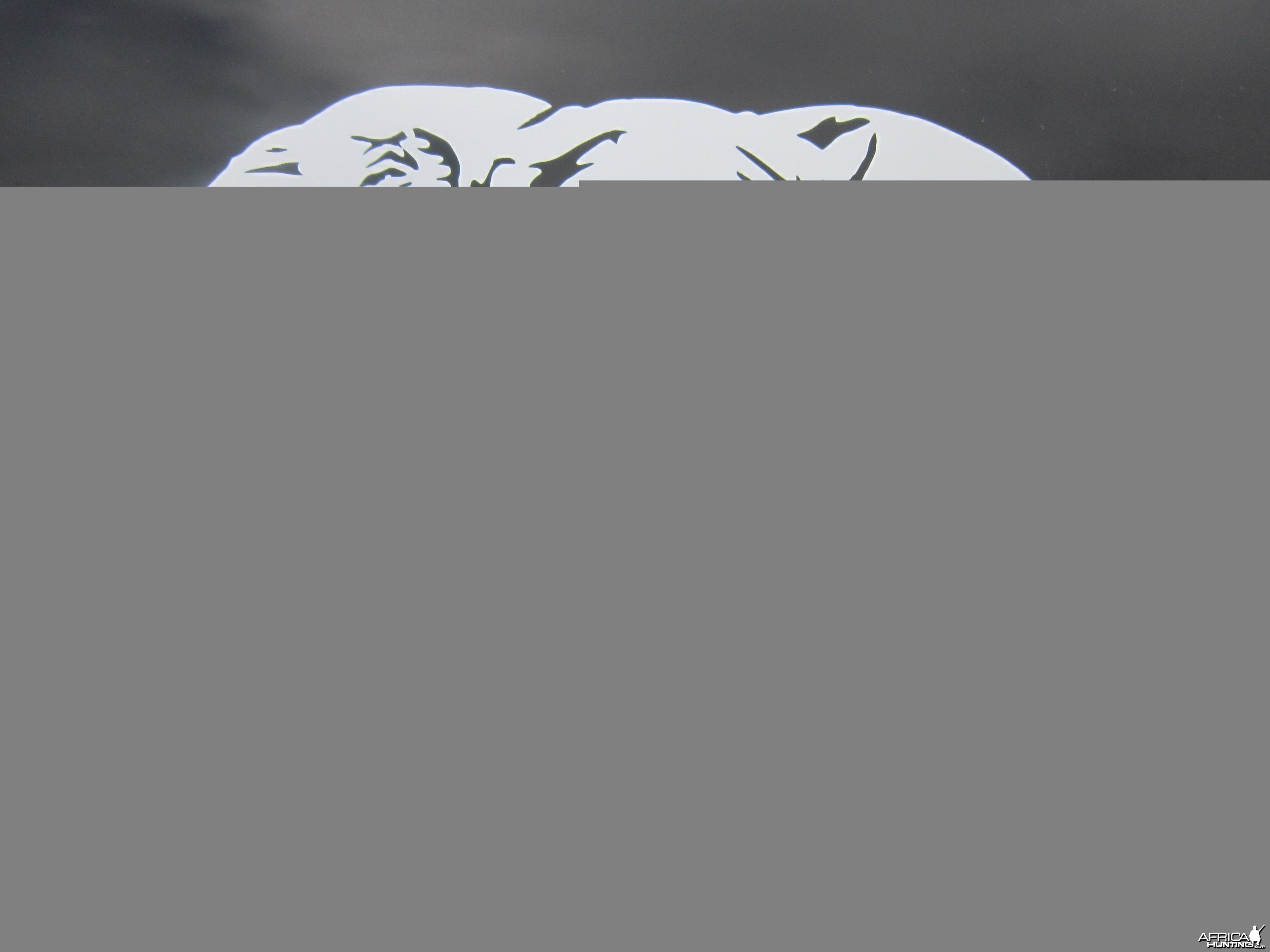 Elephant Decal Stickers