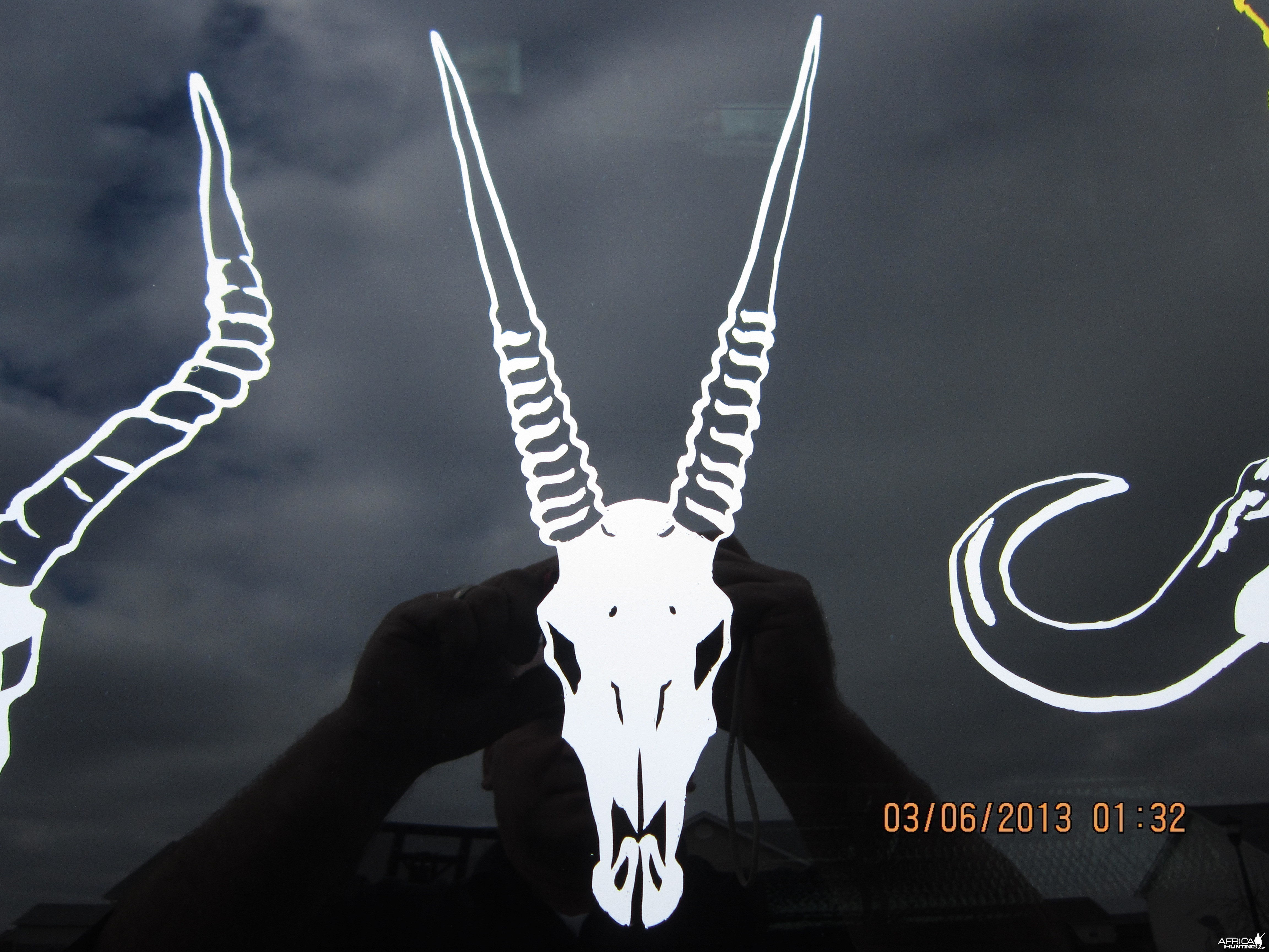 Gemsbok/Oryx Decal Stickers