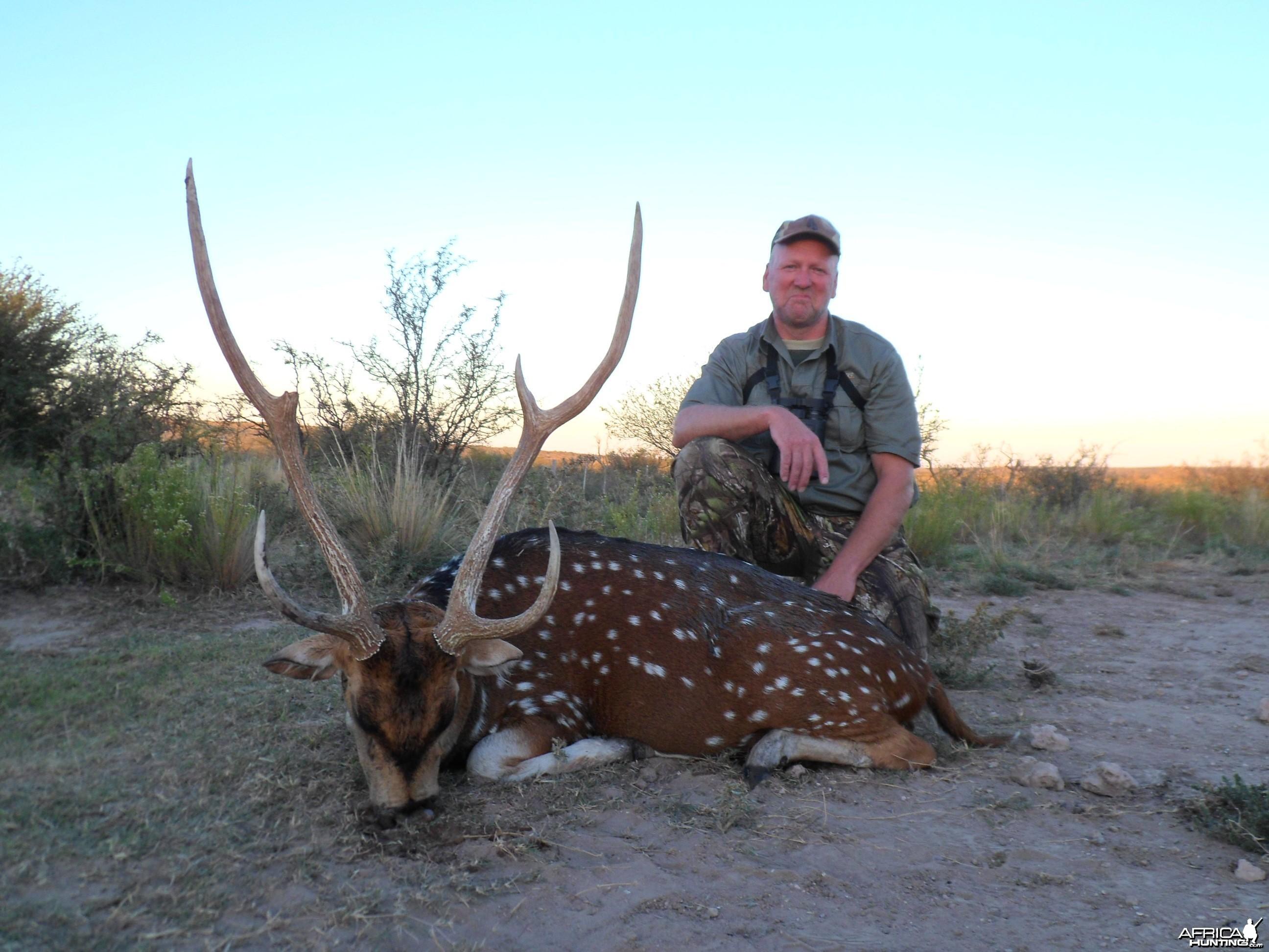 Argentina Axis deer