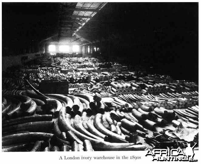 Ivory Warehouse London 1890