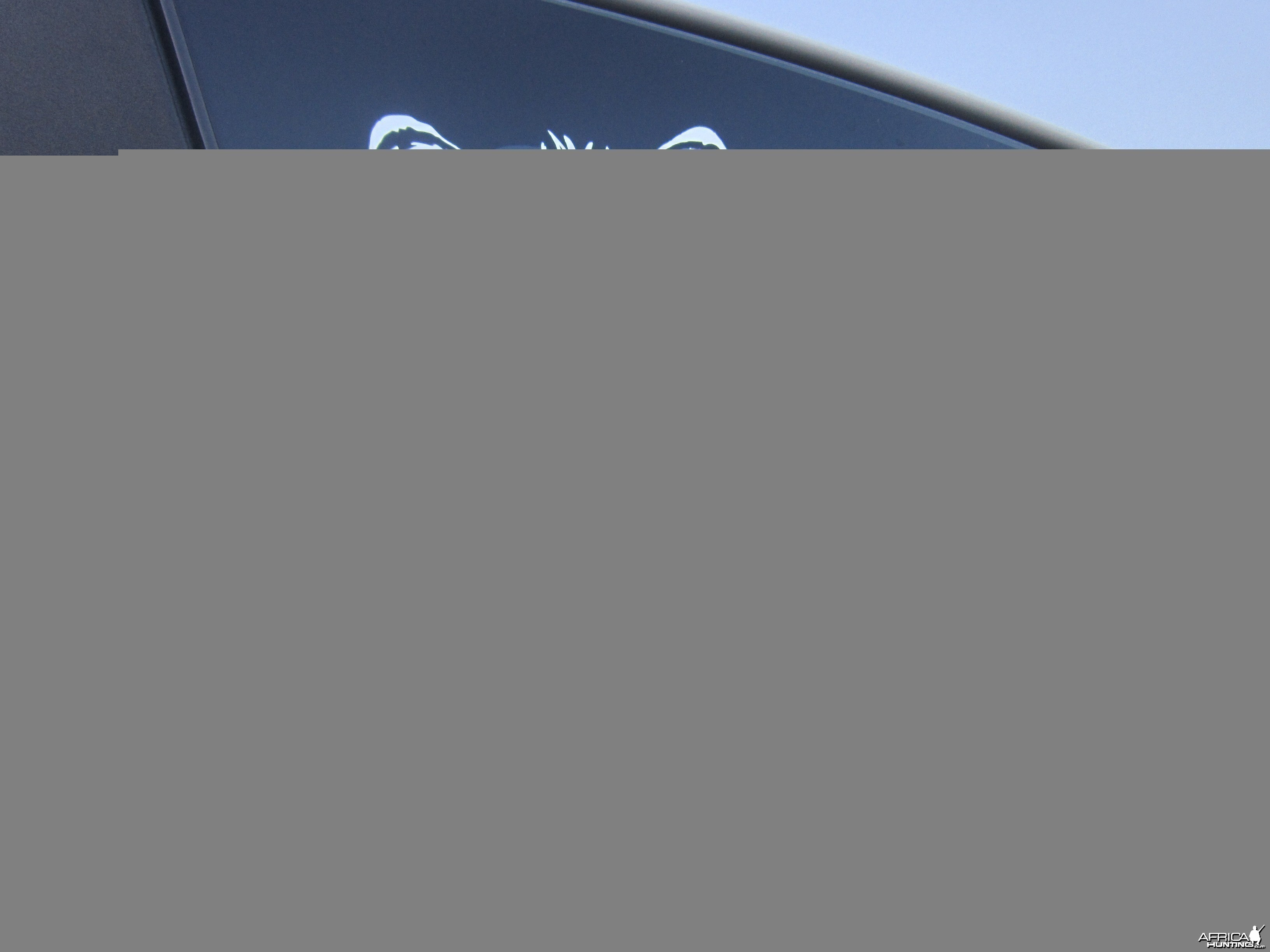 Zebra Decal Stickers