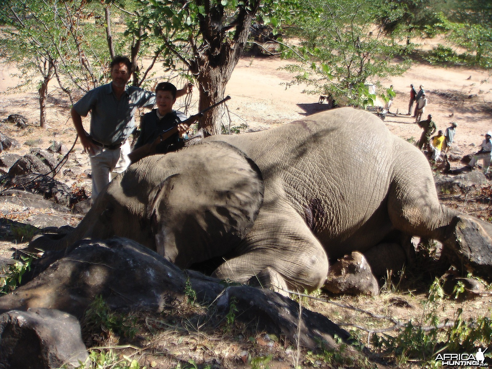 Zim 2013 Elephant