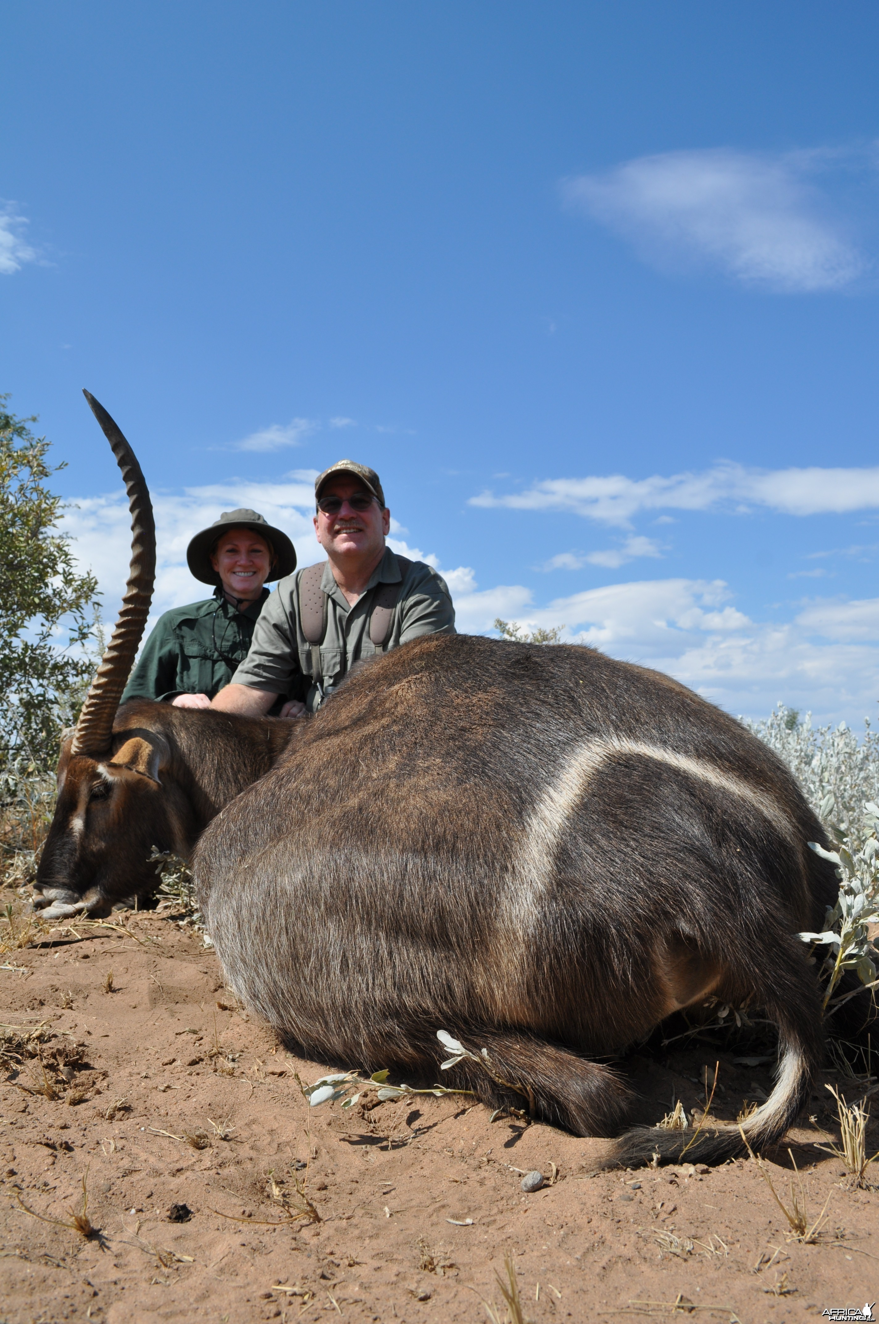 One horned waterbuck