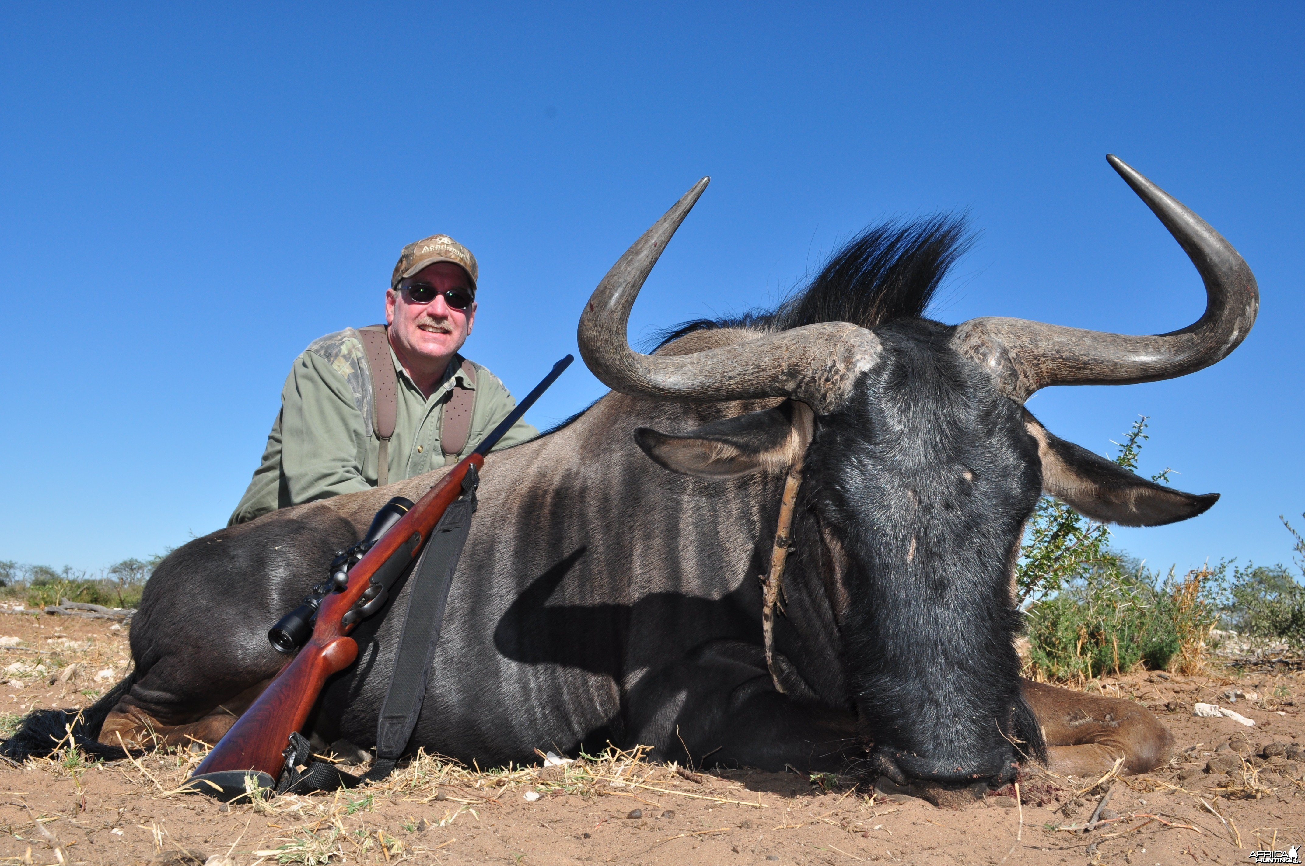 2nd Blue Wildebeest