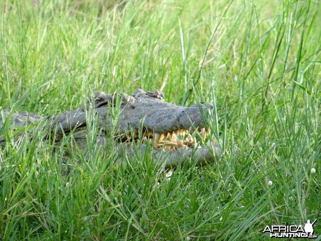 Croc Uganda