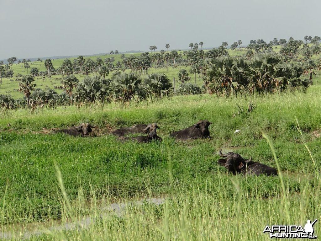 Hunting Uganda