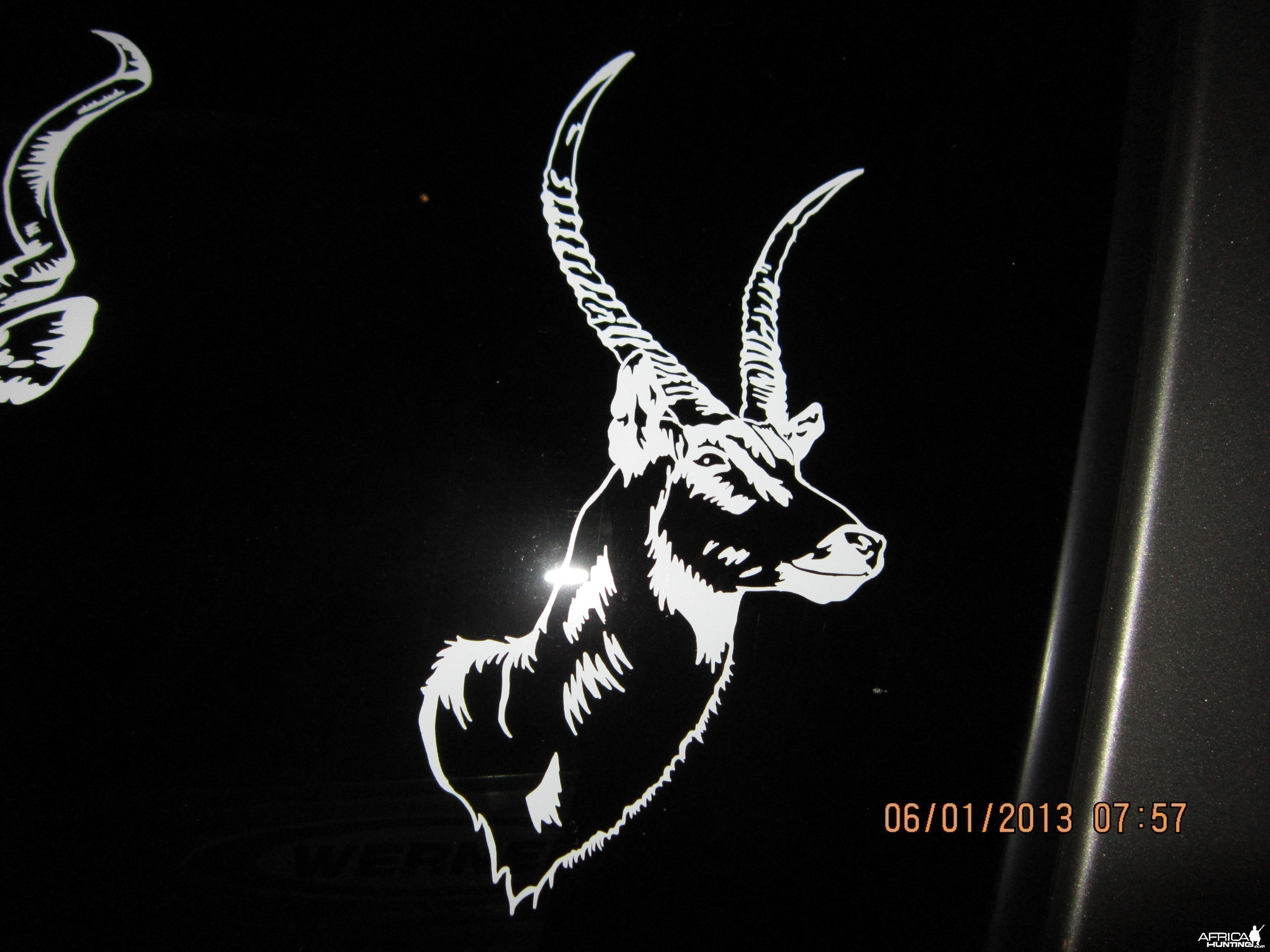 Waterbuck Decal Stickers