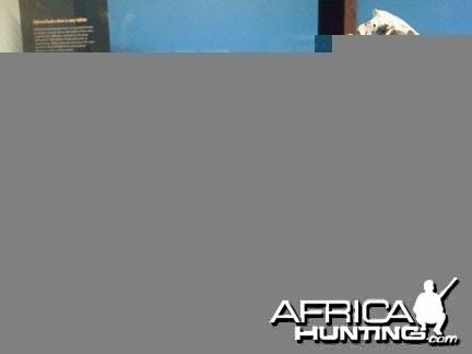 Zebra Skeleton