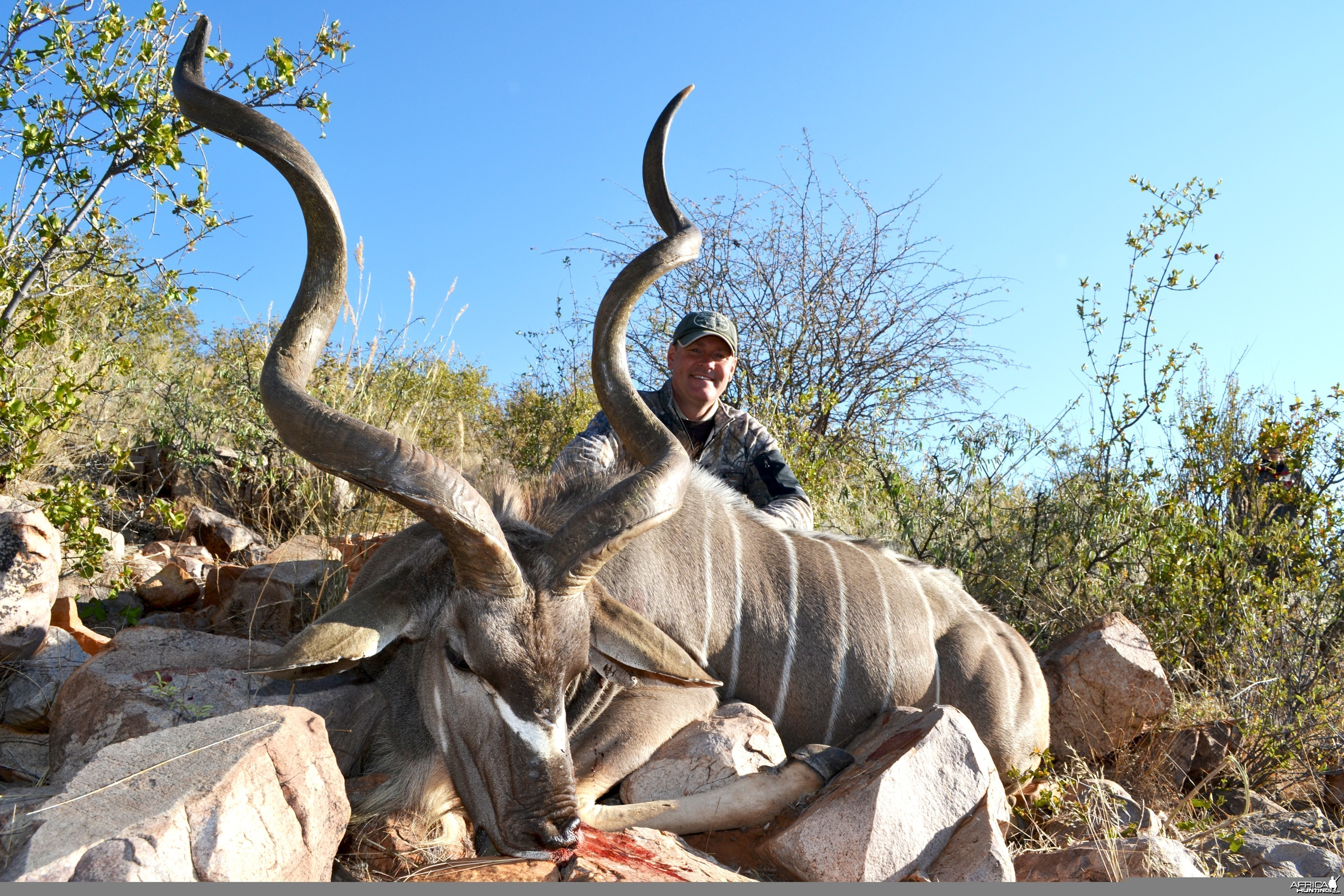 Greater Kudu - 56""