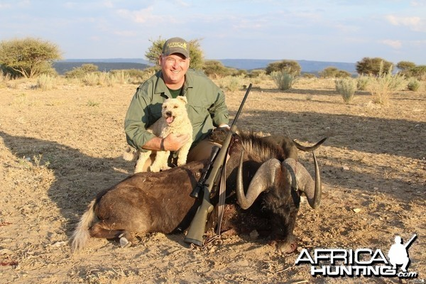 Namibia black wildebeest