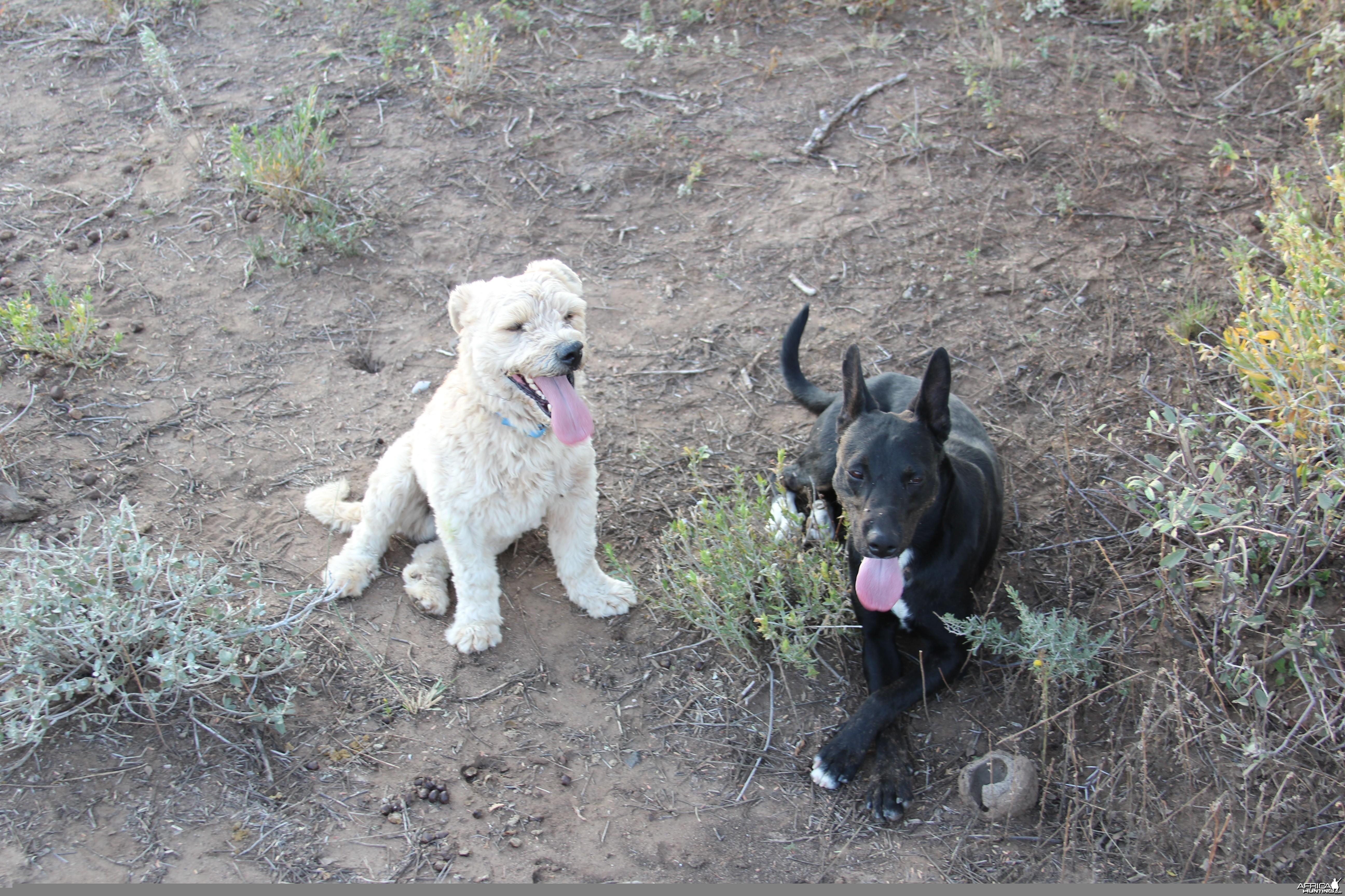 Namibian teammates