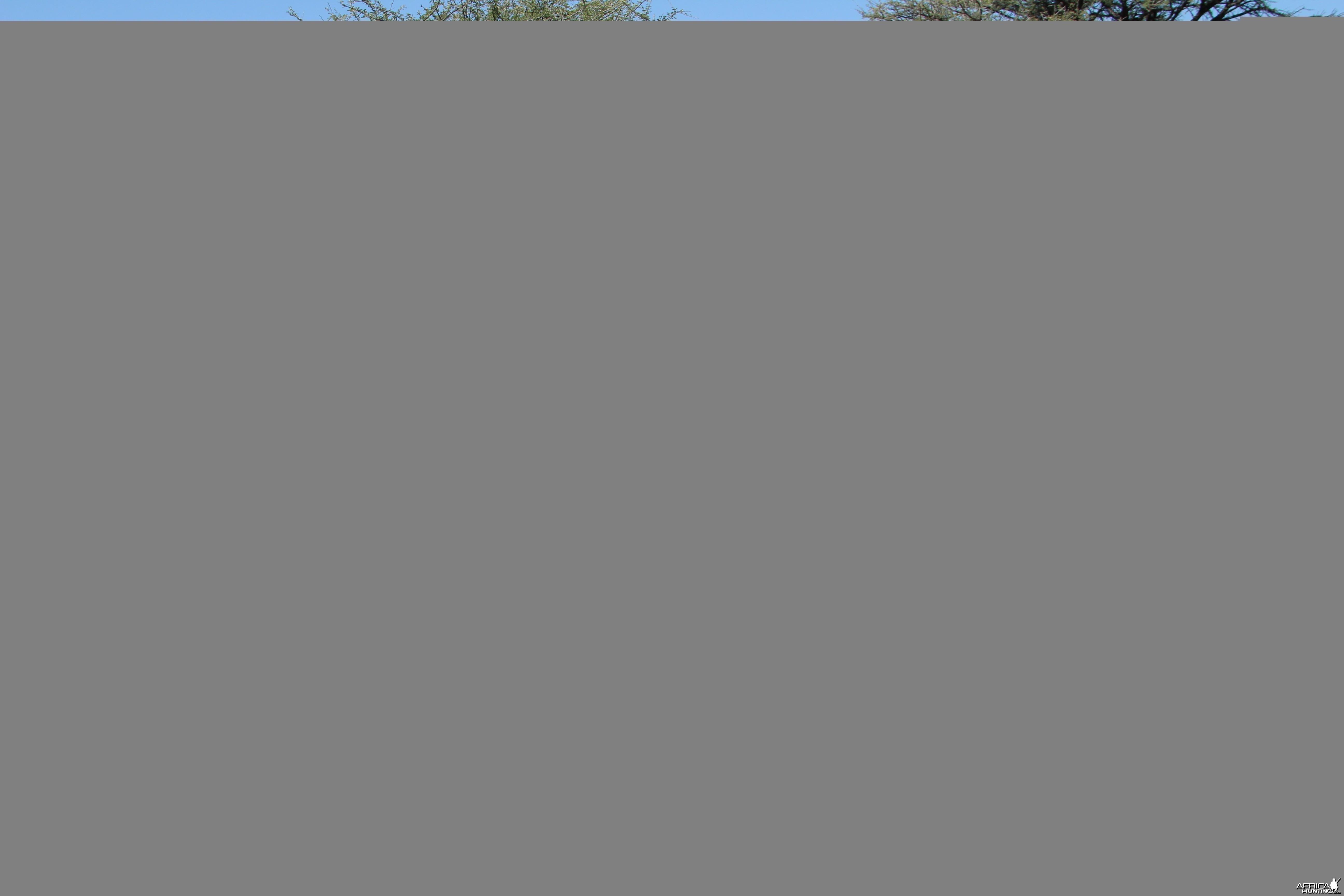 Namibia Hartman's zebra