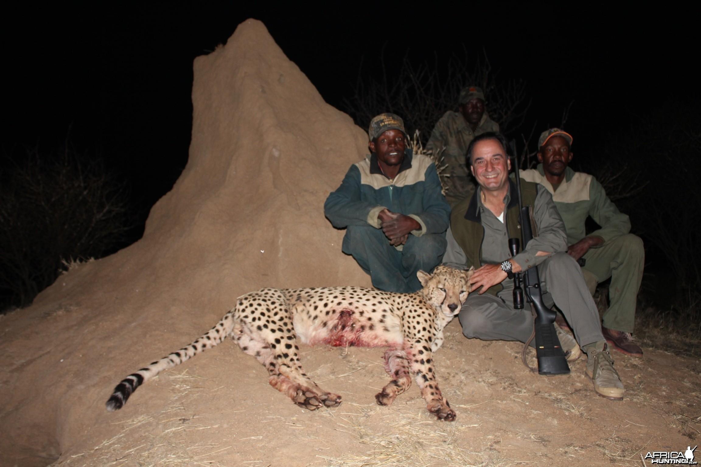 Big Male Cheetah