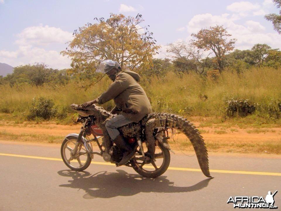 Croc on a bike
