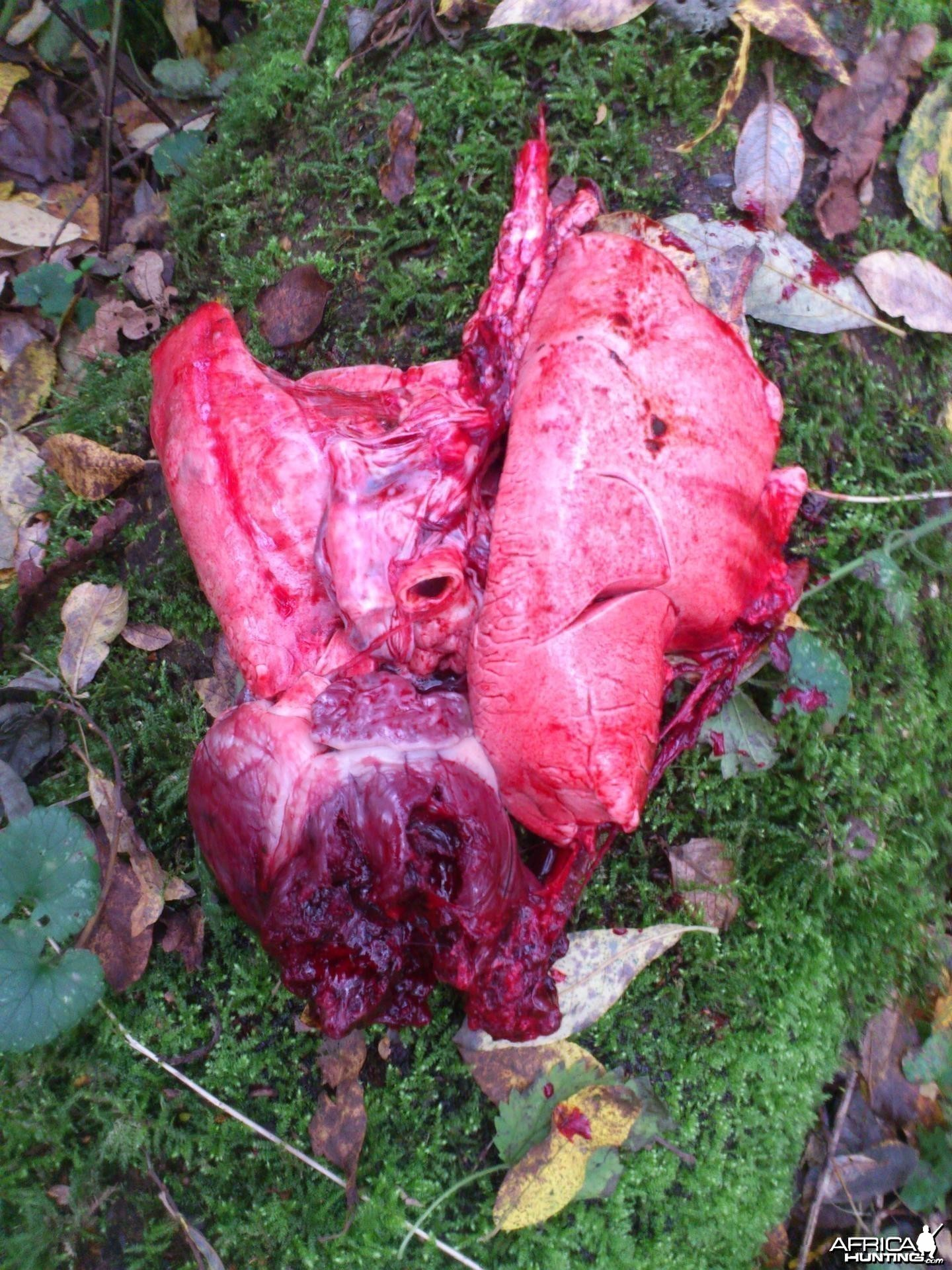 Roe buck heart