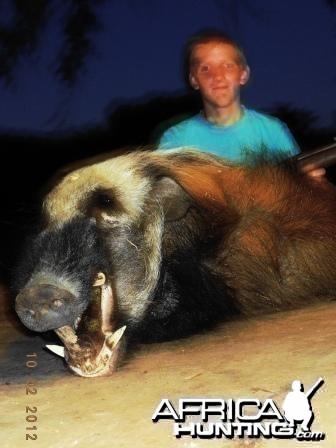 African Bushpig