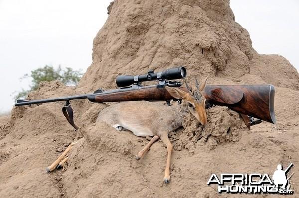 Hunting Gunther's Dik-Dik Ethiopia