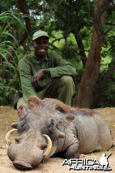 Warthog hunt with CAWA in CAR