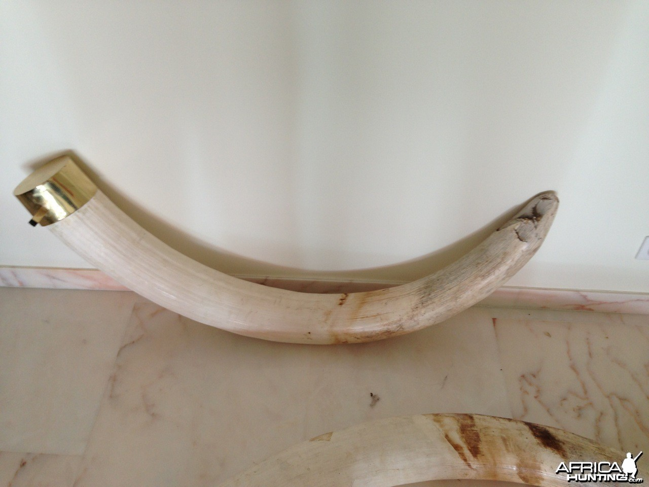 Elephant tusk from Namibia